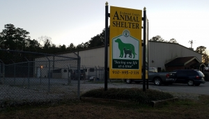 Two pit bulls that attacked a 6-year-old girl last week will be euthanized at the end of their 10-day quarantine after county officials confirmed the owner signed the dogs over to the Richmond County Animal Shelter.
